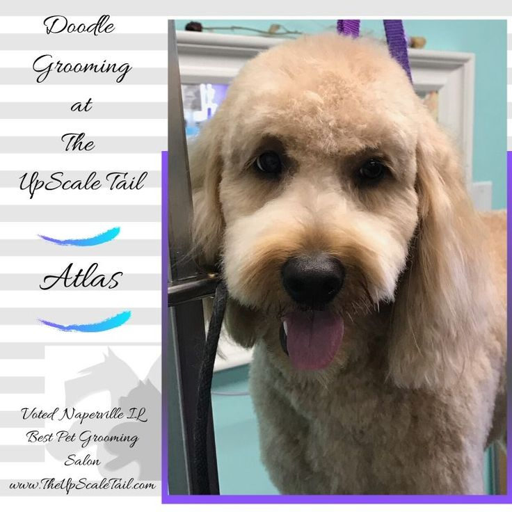 Pet grooming salon by The UpScale Tail, Pet Grooming on
