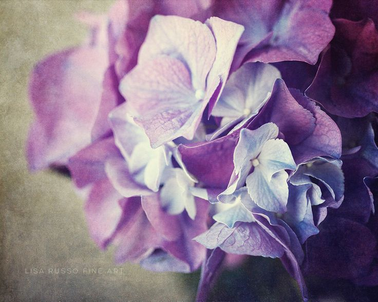 Large Bedroom Wall Art. Purple Nature Photography. Purple Bedroom Decor. Hydrangea Print. Canvas for Bedroom. Modern Wall Art. Flower Photo