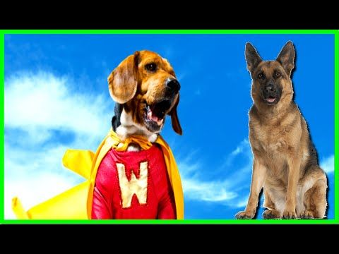 10 Most Incredible Dog Heroes of 2016