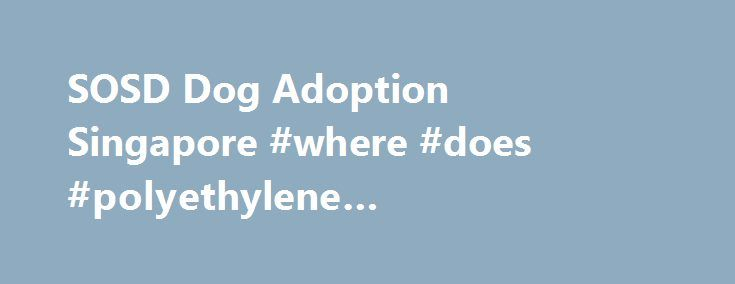 SOSD Dog Adoption Singapore #where #does #polyethylene #terephthalate #come #from http://pet.remmont.com/sosd-dog-adoption-singapore-where-does-polyethylene-terephthalate-come-from/  Adopt A Dog Adopt a Rescue Dog in Singapore Give a pup a second chance at life and gain a loyal, loving companion through our adoption program. If you're a dog lover, then choosing to adopt a rescue animal is one of the most rewarding pet-ownership experiences you will ever have. Despite (or perhaps because of)…