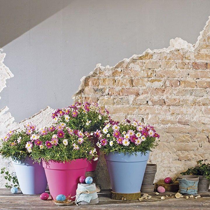 Gezelligheid op je terras met de margriet margriet elho for Outdoor schilderijen intratuin