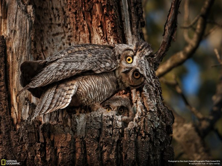 Лучшие фотографии National Geographic заоктябрь