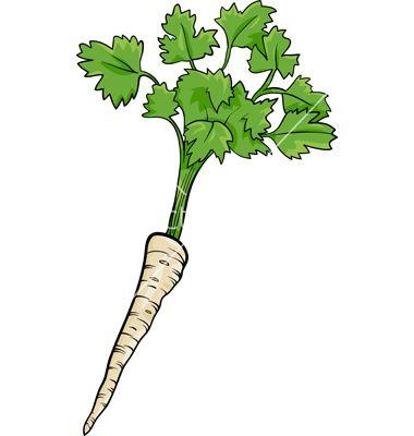 parsley-root-vegetable-cartoon-vector-1265288.jpg (380×400)