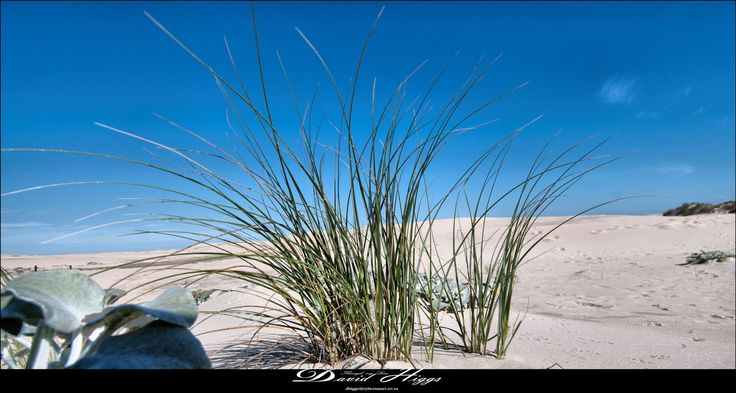 Gamtoos Dunes by DHPhotography Jeffrey's Bay