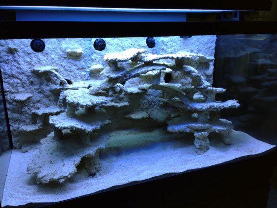 Rock Work Reef Central Online Community Saltwater Aquarium Fish Saltwater Aquarium Setup Saltwater Aquarium
