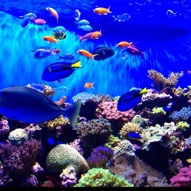 Finding nemo scripps aquarium love pinterest - Aquarium nemo ...