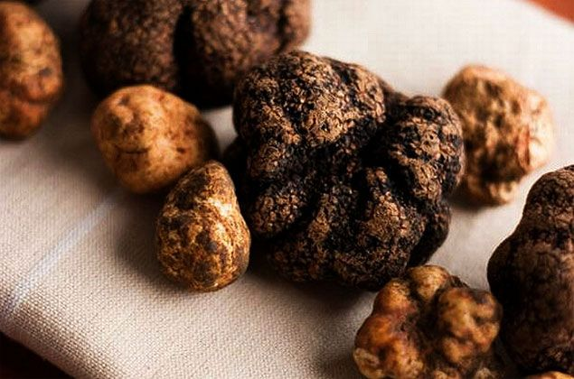 Truffles are tasty fruit of the earth, real underground treasures highly prized and sought after. They grow and develop under special environmental conditions. We are Australian based fresh truffle supplier and we specialize in the wholesale of fresh truffles and quality truffle products. We supply top restaurants, fine food shops and food lovers, throughout Australia and overseas. For more data visit us our site.