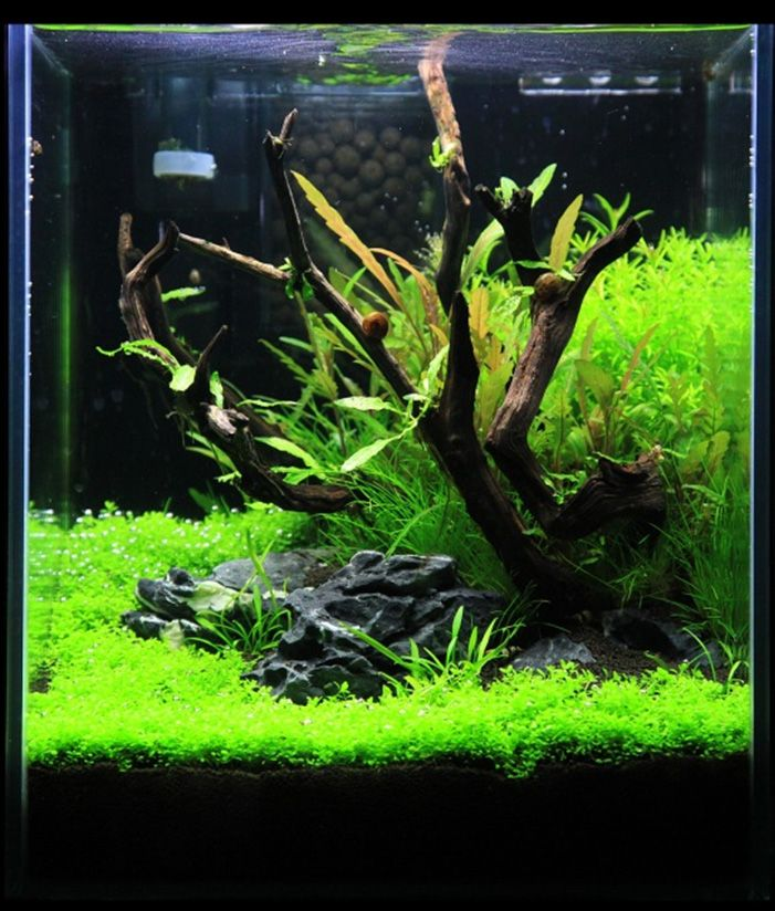Great Planted Aquarium With Driftwood & Rock  Purchase driftwood for your aquarium at www.driftwoodboss.com