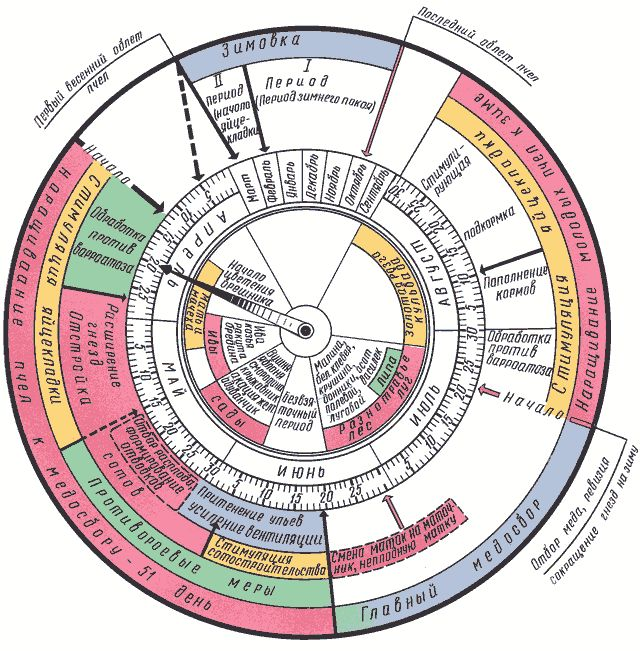 План-календарь по уходу за пчелами