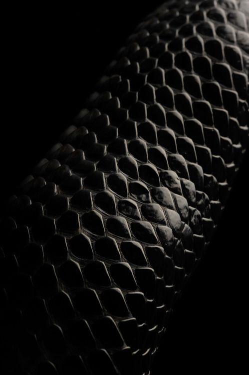 Black snake skin...