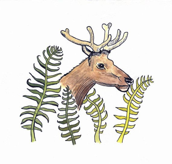 Fern Elk Art Print of Original Drawing with by FrancesMarin, $20.00