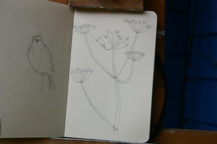 Sketchbook plant drawing