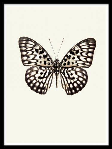 Vintage Butterfly print. Poster med vintage fjäril.  En poster med vintage fjäril på en lite sepiafärgad bakgrund. Matchar fint ihop med våra andra posters med insekter i samma stil.