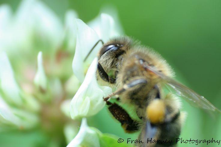 Pollinating...