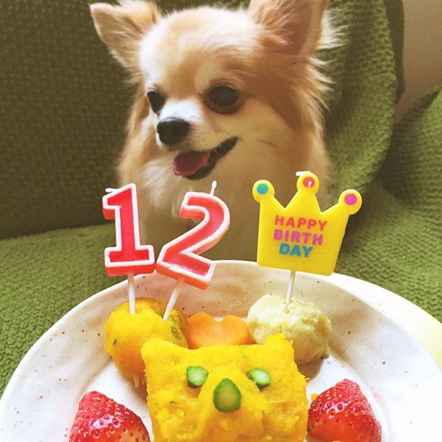 今日はリックの12歳の誕生日🎉🐶✨ 息子と手作りワンコ野菜ケーキ🎂作ってみました😊 ノアもリックもペロリと一瞬で食べちゃった😋 穏やかで優しい癒し犬リック…息子や友達に好かれすぎて大変だと思うけどいつまでも元気で長生きしてね😊💕 ちなみについでみたいですが(笑)私の父も今日誕生日🎊仕事無理しすぎないように身体に気を付けてね❣️ リックもおじいちゃんもおめでとう✨㊗️✨ #誕生日 #birthday #happybirthday #犬用ケーキ #おめでとう #12歳 #犬 #dog #pet #ペット #わんこ #チワワ #chihuahua #愛犬 #lovedog #リック #ロングコートチワワ #癒やしわんこ #ビビり犬 #instadog #dogstagram #myfamily