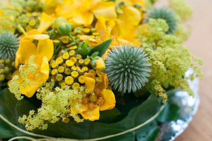 Billedresultat for efterår grøftekant blomst gul