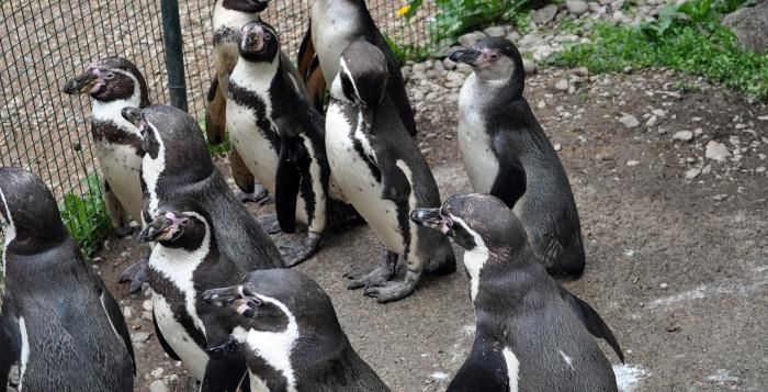 Zoo Plzeň nabízí na Silvestra sváteční program, na Nový rok slevový bonus
