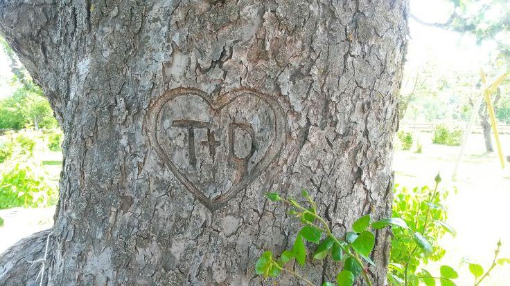 Kärleksträd. Hagadal anno 1909. ♡