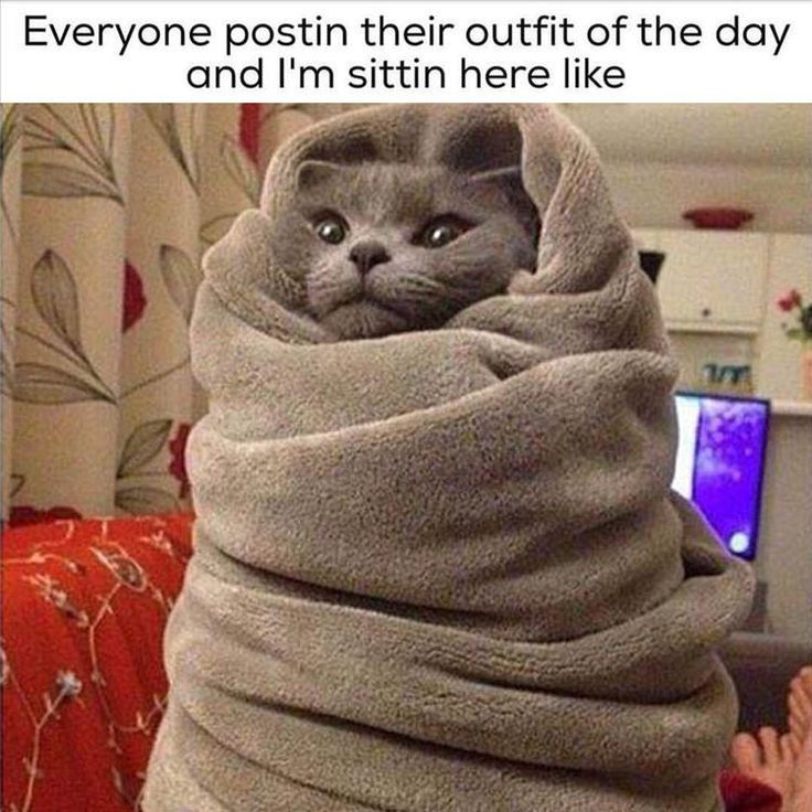 096d6341926cb9cc00abedd95880607e purrito outfit of the day 691 best random images on pinterest funny memes, funny stuff and,Im So Cold Meme