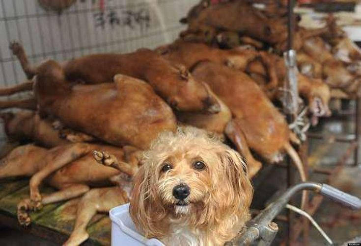 Although dogs have been eaten in parts of East Asia for hundreds—and possibly thousands—of years, a relatively new festival in Yulin, China, has sparked glo