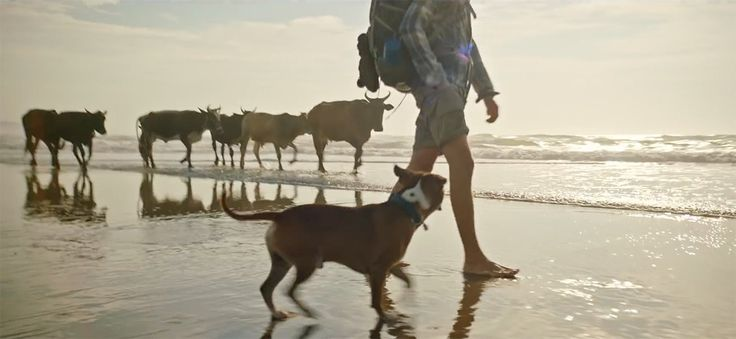 "Bobtail: 'Love for Journey' new Ad for Dog Lovers Story of a man and his best friend- Love for Journey  South African dog lovers and outdoor enthusiasts have taken to social media en masse to share their love for Journey, the new Bobtail dog food Ad directed and shot by Egg Films' Jason Fialkov for Mortimer Harvey.    Filmed along South Africa's ridiculously beautiful Wild Coast, it's the story of a man's journey to find himself - with his Staffie.  ""It feel"