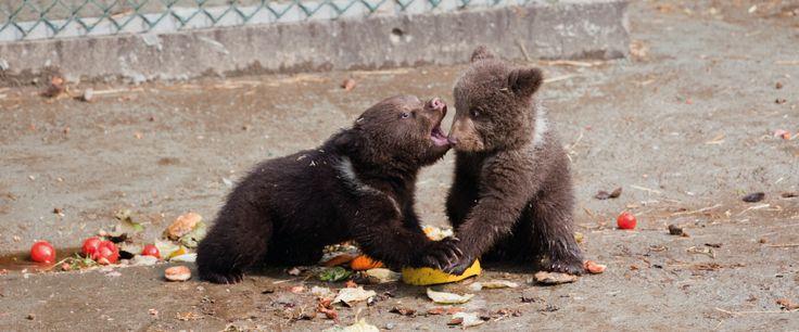 Bjørneparken   Foringsprogram