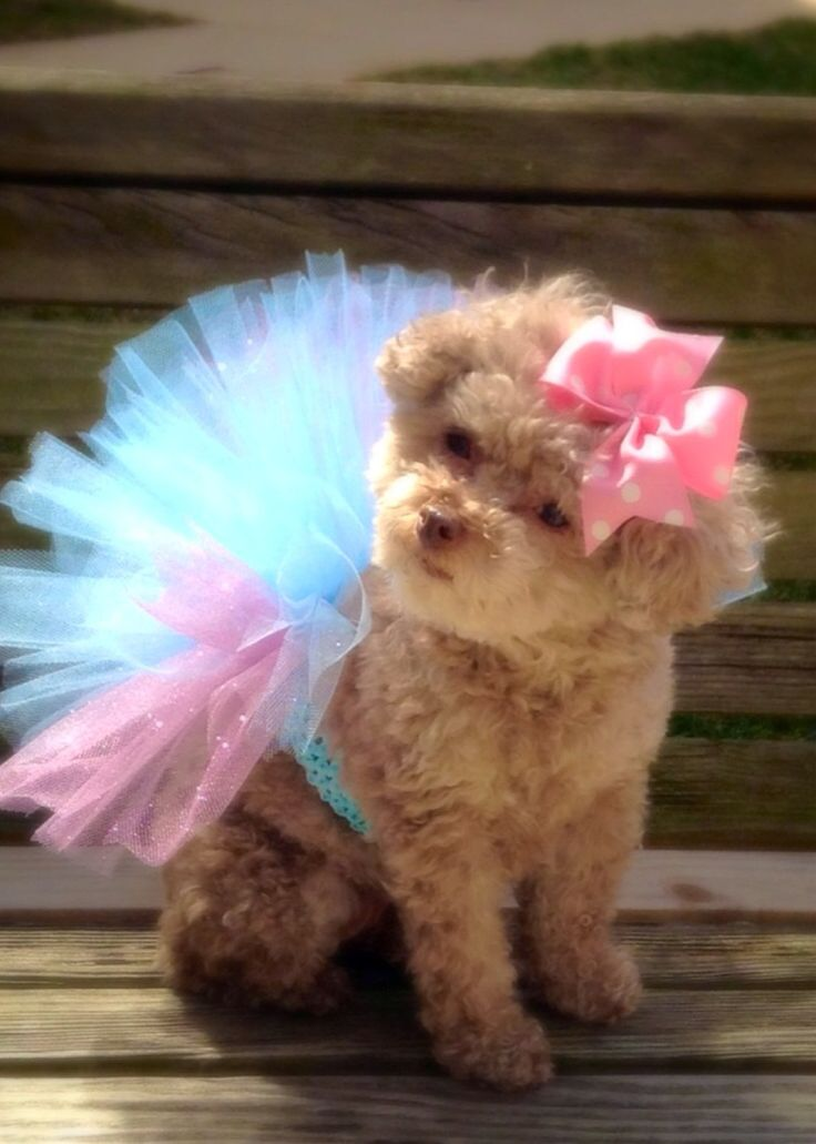 Dog Tutu, Extra fluffy and full, available in all colors, monogrammed bow by CreateAlley on Etsy