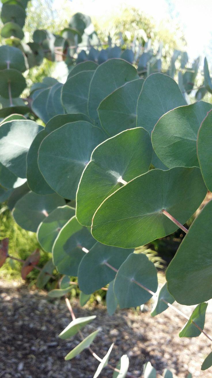 Meer dan 1000 ideeën over bamboetuin op pinterest   bamboe planten ...