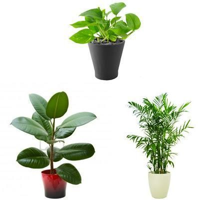 best 25 air purifying indoor plants ideas on pinterest house plants air purifying indoor. Black Bedroom Furniture Sets. Home Design Ideas