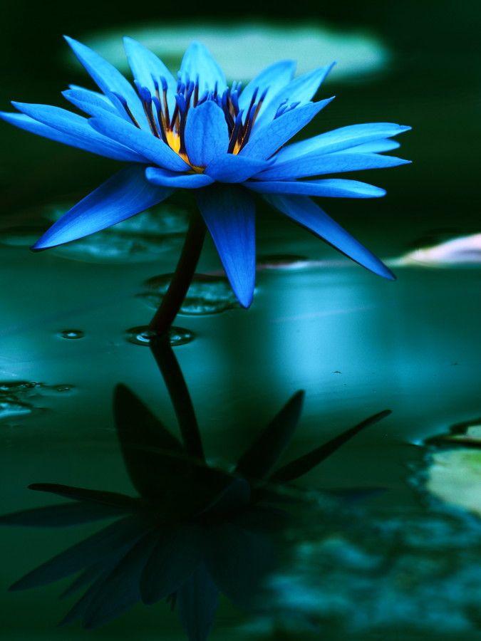 ~Blaue blume~