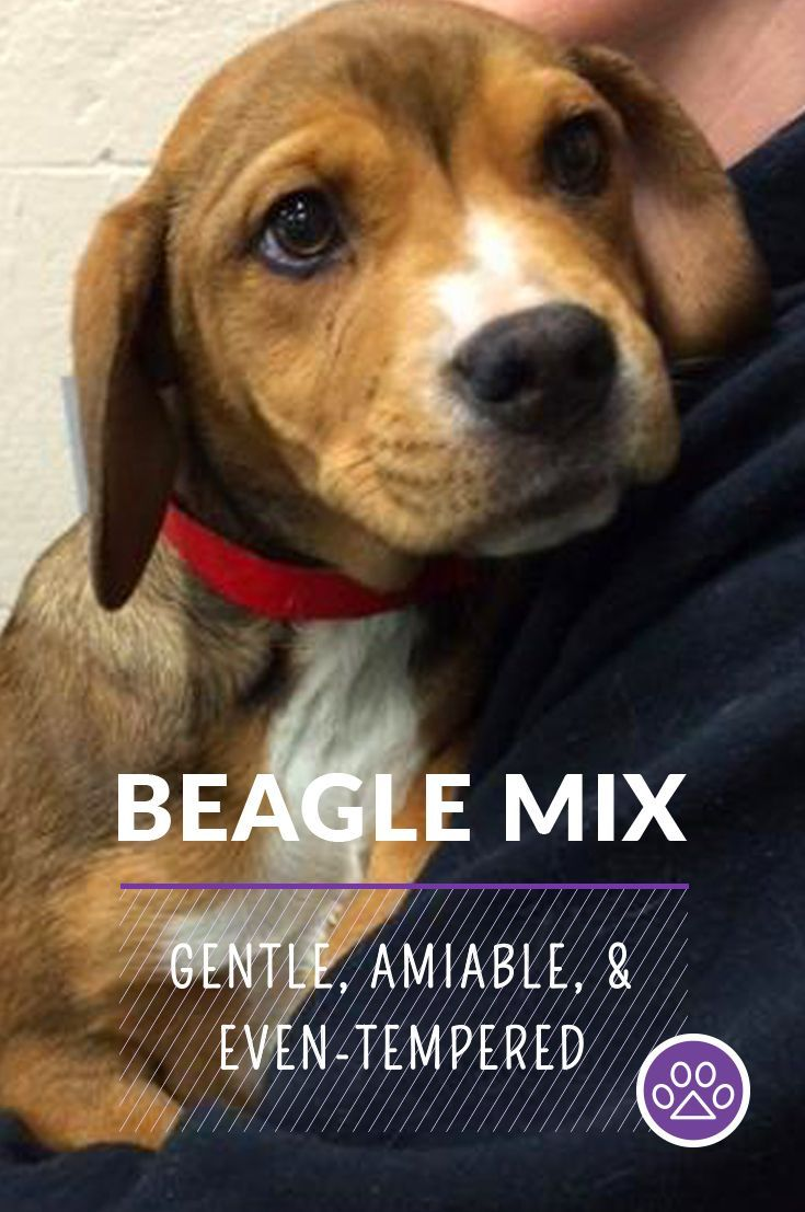 Intelligent Petfinder Adoptable Cheerful Families Company