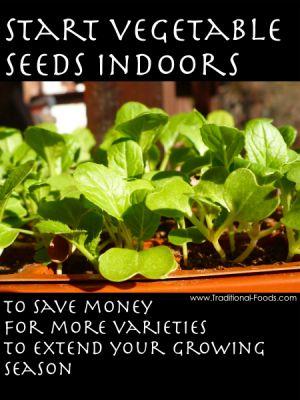 71 best indoor gardening activities images on pinterest for Indoor gardening lesson