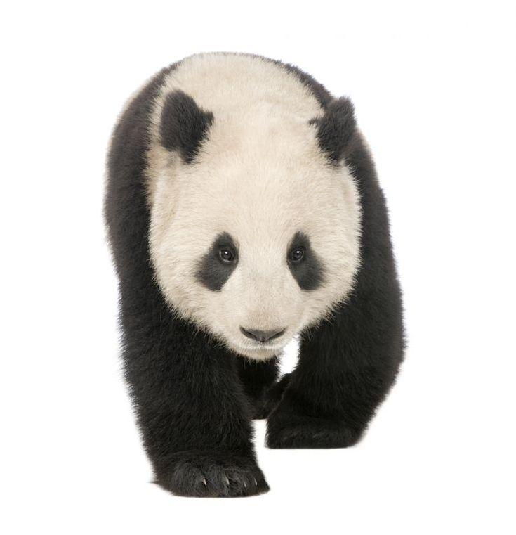 Your Google Algorithm Cheat Sheet: Panda, Penguin, and Hummingbird - Moz