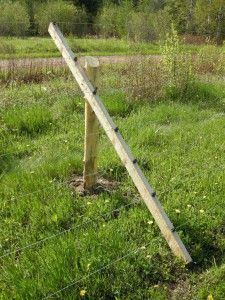Electric Slanted Deer Fencing Fences Pinterest Wire