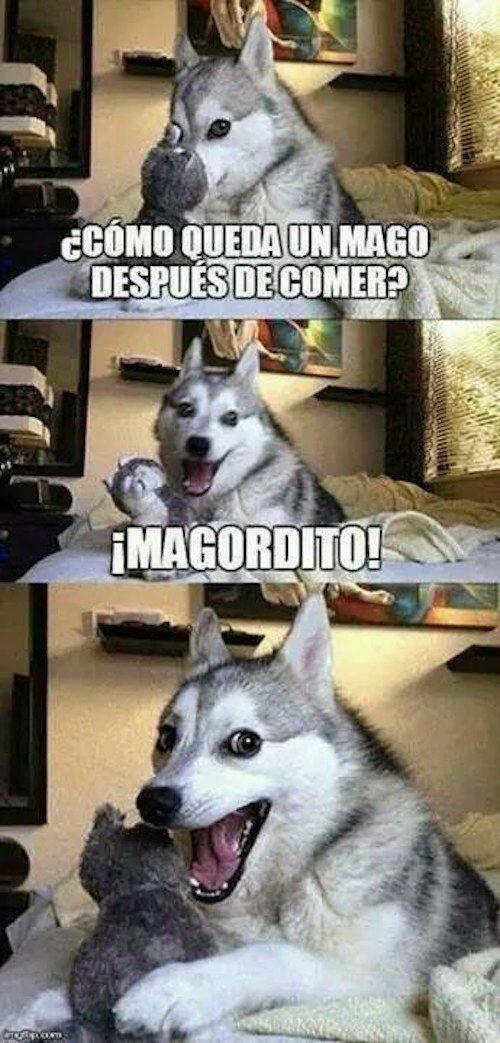 Perro Husky meme