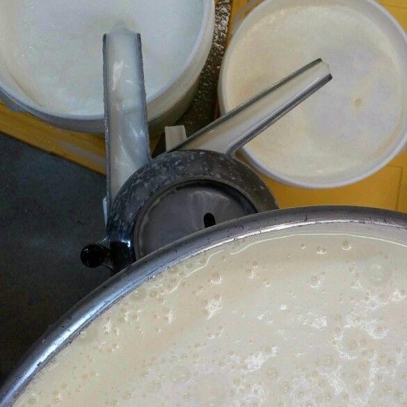 Seperating cream to make #grassfedbutter #grassfed