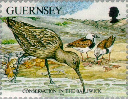 Známky: Eurasian Curlew (Numenius arquata) (Guernsey) (Nature protection) Mi:GG 530,Sn:GG 465d,Yt:GG 537,AFA:GG 537