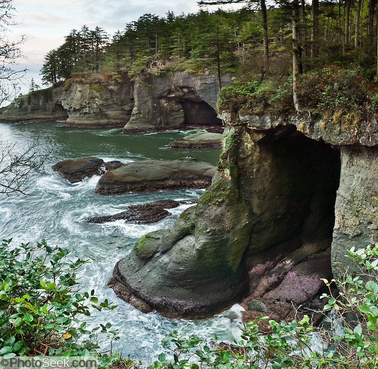Cape Flattery, NW most Point of WA on the Makah Indian Reservation. Awesome caves and you can watch Puffins hunt under water.