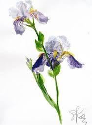 Znalezione obrazy dla zapytania iris watercolor