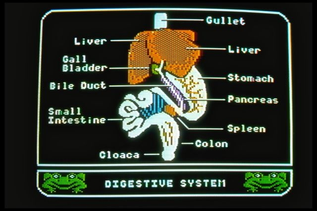 Operation Frog (1984): Digestive system