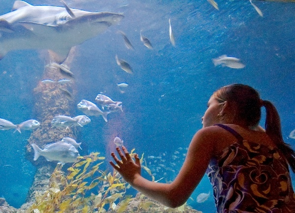 Perth, Australia | AQWA - The Aquarium of Western Australia
