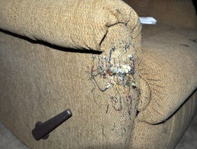 ... Stop Your Cats From Scratching Furniture Cher Is Back On The Charts  With Woman S World Cats Furniture And Articles ...