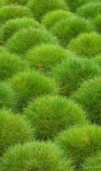 Coussins verts !
