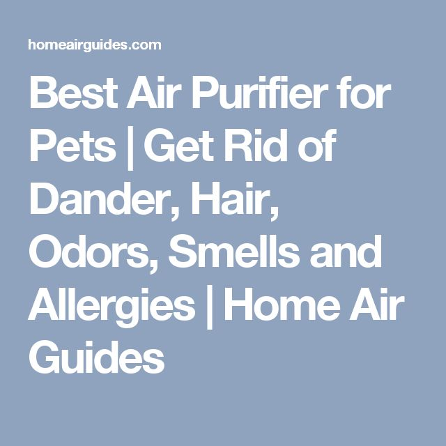 how to get rid of cat dander in your home