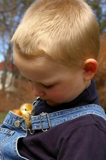 A wee boy nestles a baby chick in his overalls... So dear! - (Country Kids photo contest winners, | Living the Country Life)  <> (farm, farmyard, rural)