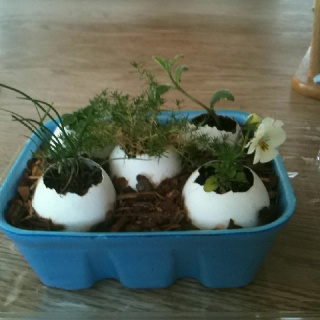 12 best happy irish easter csca ssta images on pinterest irish moss chives variegated mint and violas started in egg shells easter basket negle Gallery