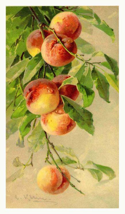 Картинка персики для фен шуй