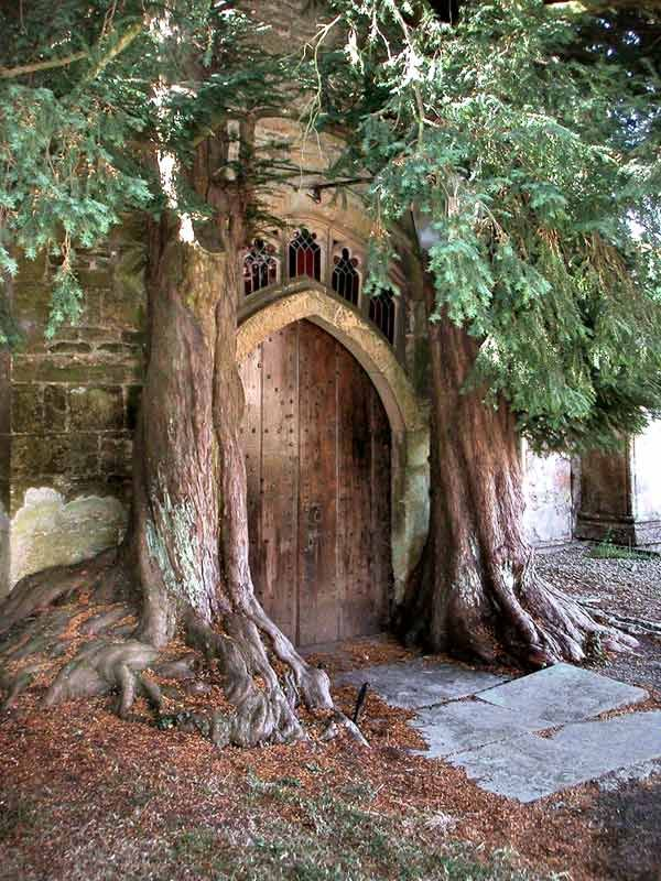 Church Door- Gothic wood door with two large trees guarding the entrance.