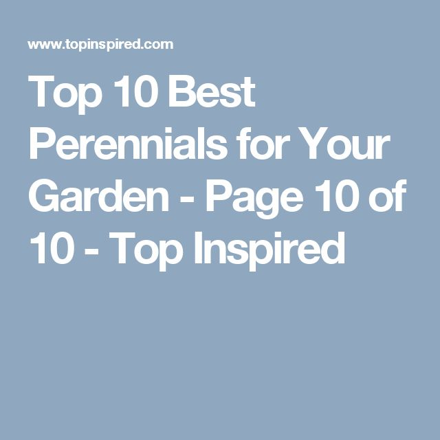 Top 10 Best Perennials for Your Garden - Page 10 of 10 - Top Inspired