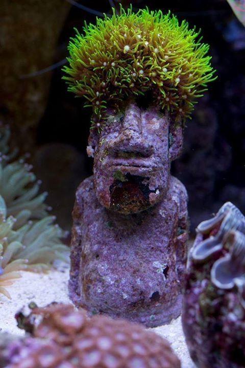 25  best ideas about saltwater aquarium on pinterest